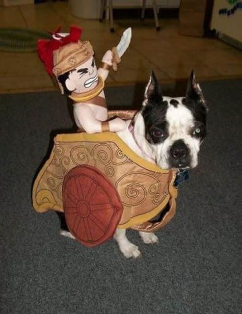 so cuteboston terrier chariot pet halloween costumescute - Halloween Costumes In Boston