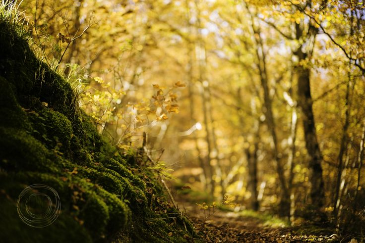 Simone Della Fornace Photography - Blog - Autumn is coming