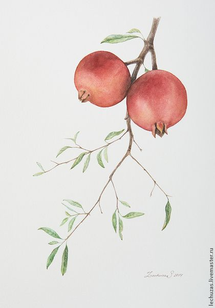 Pomegranates. Traditional art ( watercolor). Prof. paper: Canson Fontenay 300 g/м2 (cotton). Svetlana Markina (LechuzaS) Size: 20cm*35cm