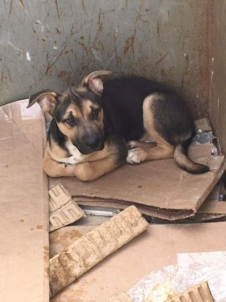 A German shepherd puppy found in a garbage container found his forever home just seven days after being rescued.