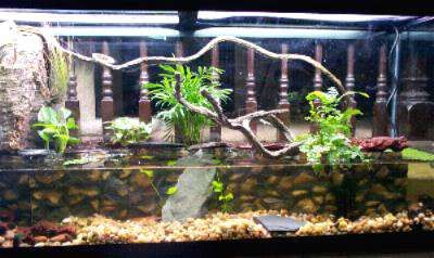 Another tutorial teaching you how to create a paludarium... complete with a description of the different types! This one is great because it shows the different types of live plants that were used in the making of the paludarium.