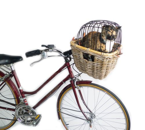The Cat's Out of the Bag: 3 Ways to Carry a Cat by Bicycle - Eleanor's | Stylish Bicycle Accessories for Ladies