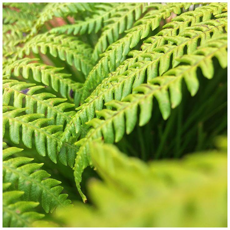 Love ferns. Kiwi that I am.