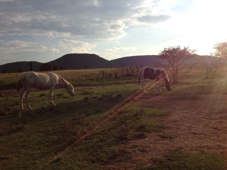 On the farm, lovely sunset