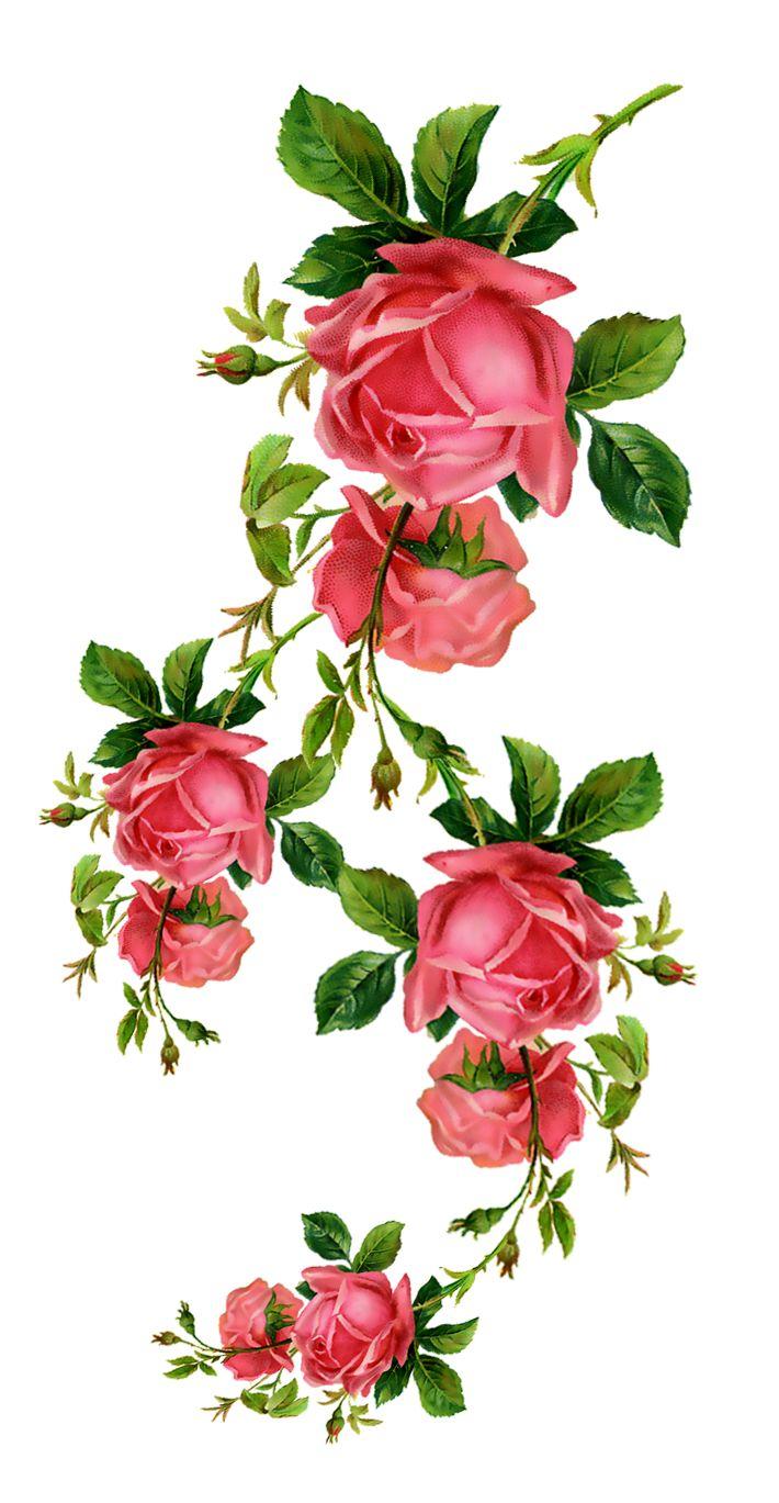 Приколы статусы, открытка с веткой розы