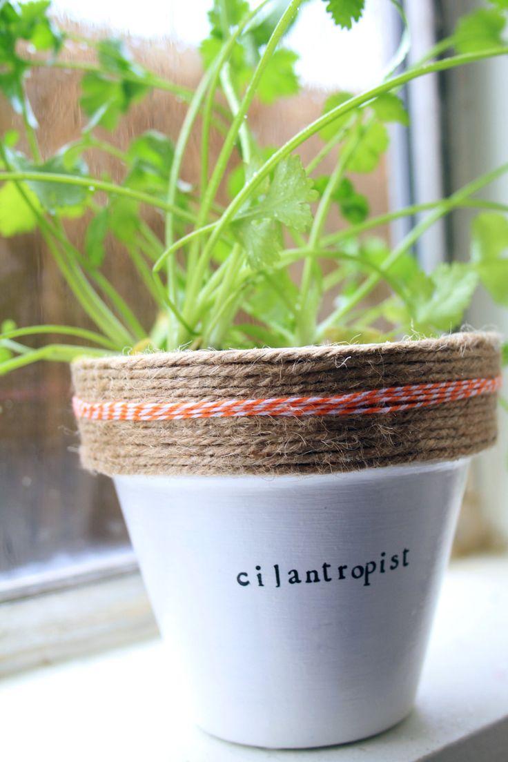 Cilantropist // Cilantro Plant (25.00 USD) by PlantPuns