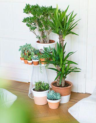 17 beste idee n over cactussen tuin op pinterest cactus cactus terrarium en mini cactustuin - Scheiding in hout deco interieure ...