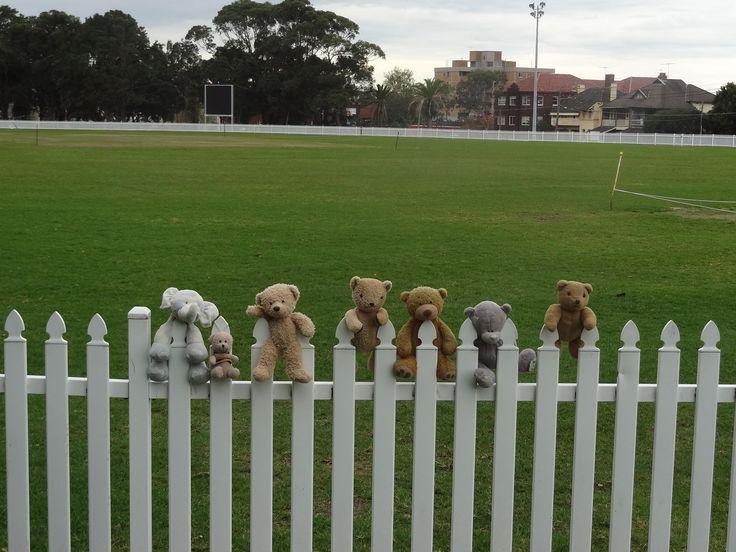Tragic cricket bears #cricket