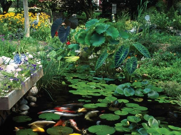 176 best images about water features on pinterest for Plants that live in a pond