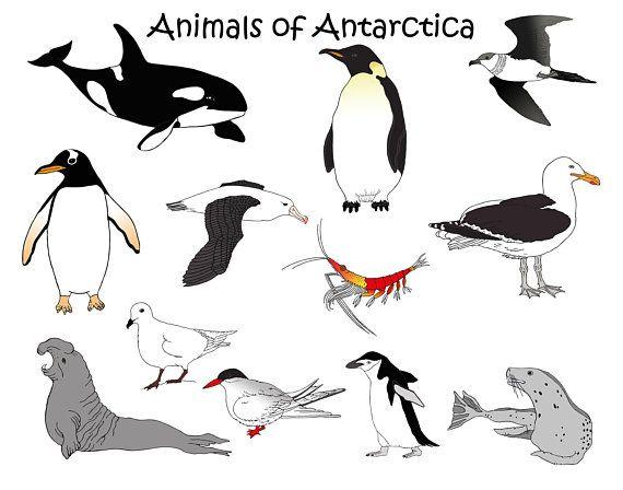 Antarctica Animals Downloadable Clip Art Orca Penguin Etsy Antarctic Animals Animals Antarctica