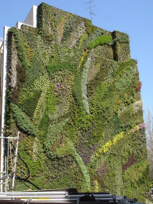 It's amazing that this amazing art is made from plants!