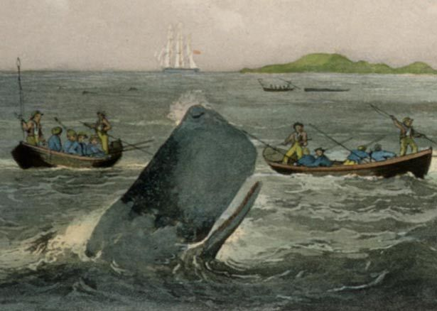 the impact of the arrival of sealers whalers and traders in maori society A european population explosion first impacted on new zealand in the closing decade of the 18th century when sealers and whalers began to arrive in home culture and society pre-1840 contact sealers and whalers making the relationship between maori and pakeha whalers one of.