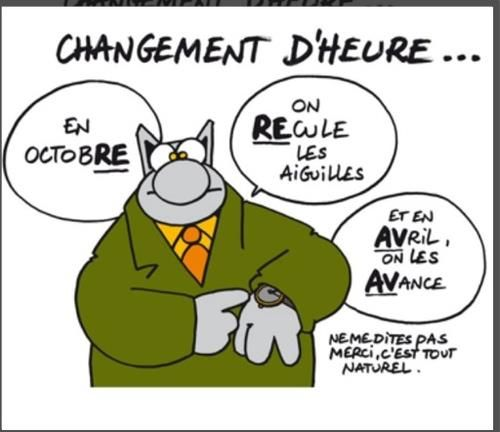 Le Chat malin ( malgré son air stupide )