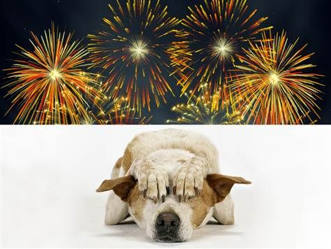 How to prepare your dog for July 4th fireworks  (featurepix, Getty stock): July Fireworks, 4Th Fireworks, July 4Th, Loud Sounds, Terrifi Dogs, Fireworks Safety, Dogs Safety Tips For Summer, Animal, Fireworks Loud