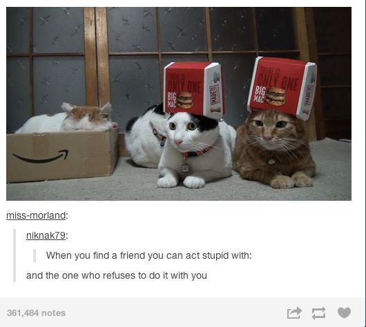 this applies to my friend group perfectly. (if you couldn't guess, I'm one of the nutty kitties)