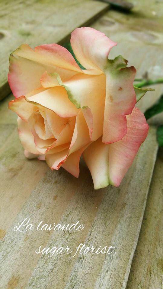 Rose | La lavande Sugar Flowers