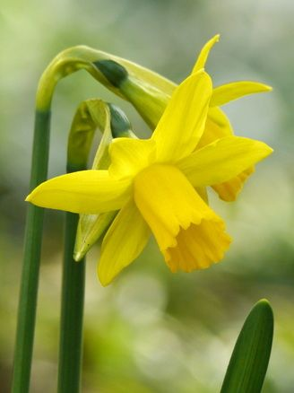 "Narcis// If I 'm a ""narcis"", I really hope that I'm an unusual one :P"