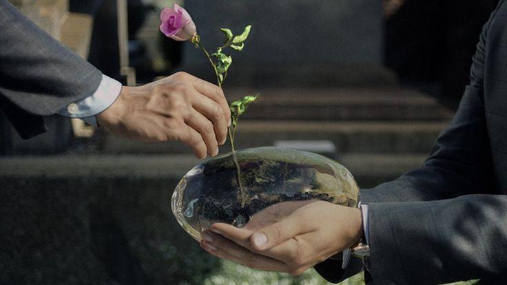 A Rose Reborn: director's cut