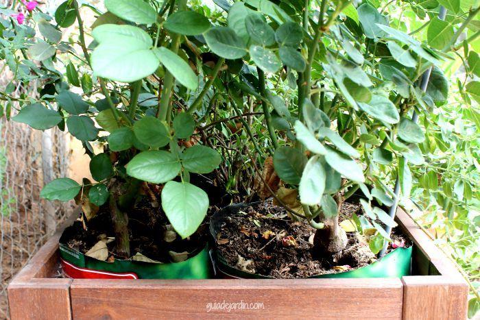 Guia de jardin blog de jardiner a y plantas jardiner a for Plantas para mi jardin
