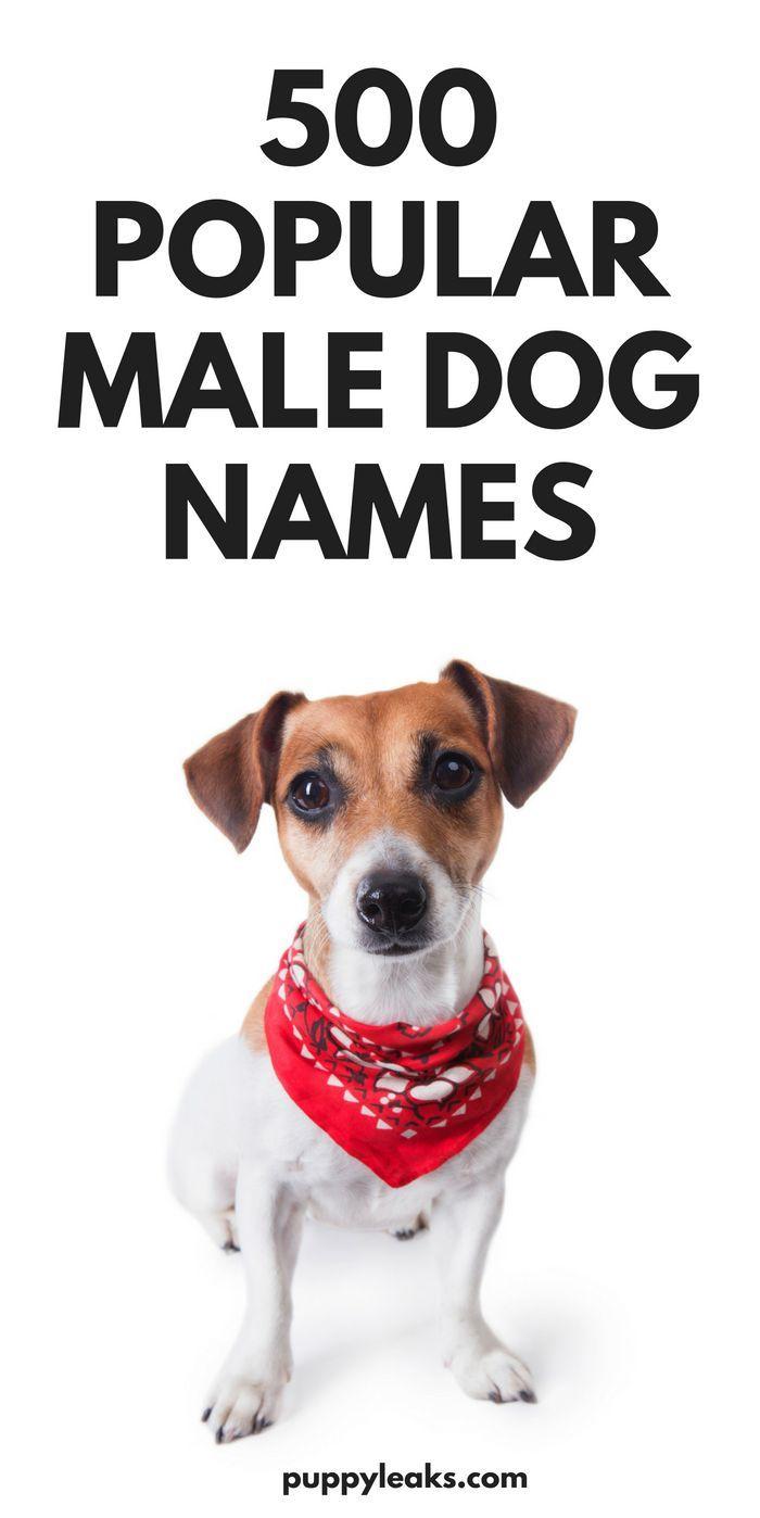 500 Popular Male Dog Names Dog Names Male Dog Names Boy Dog Names