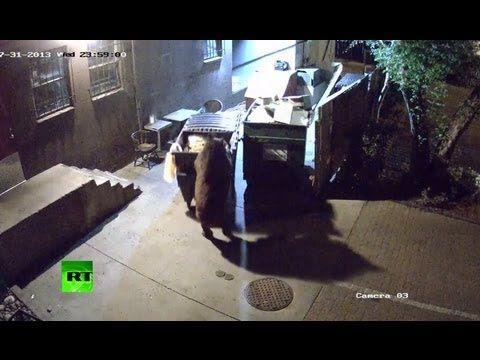 В Колорадо медведь ворует у ресторана мусорные баки