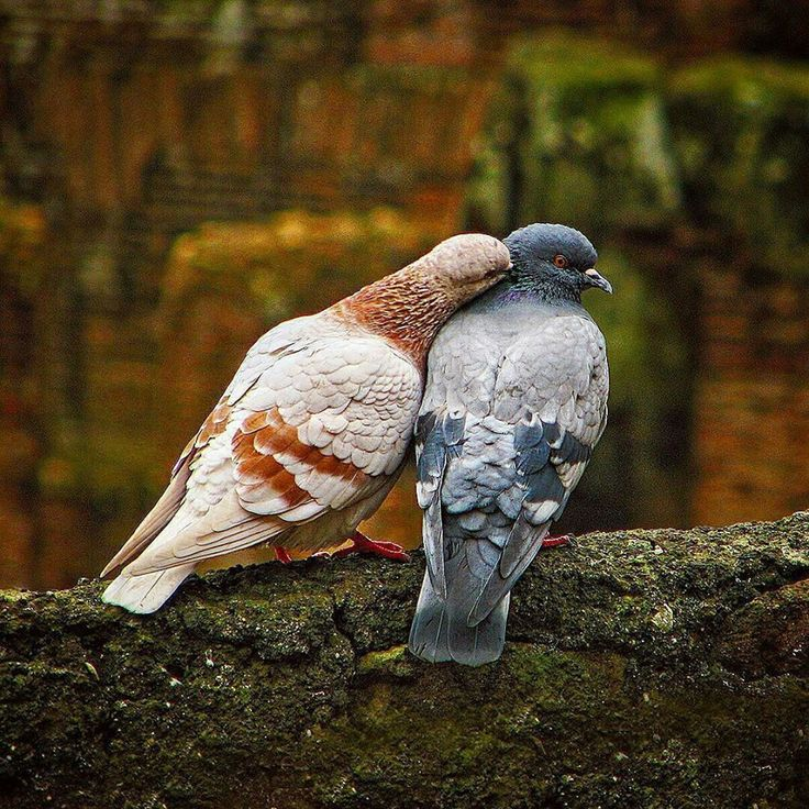 "namk1: ""some one say Dove Love but I believe it's pigeon love """