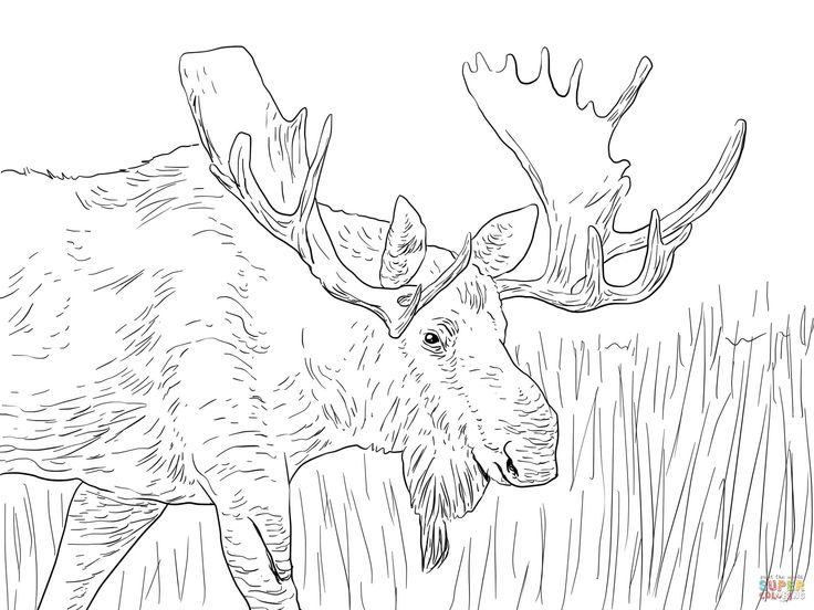 moose coloring pages fantastic free coloring pages mcoloring
