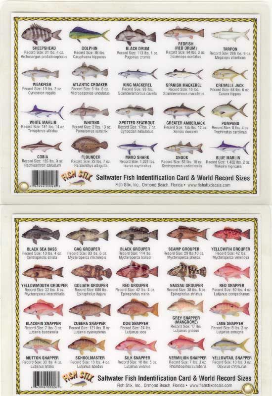 76 best images about fish chart on pinterest fish chart for Saltwater fish chart