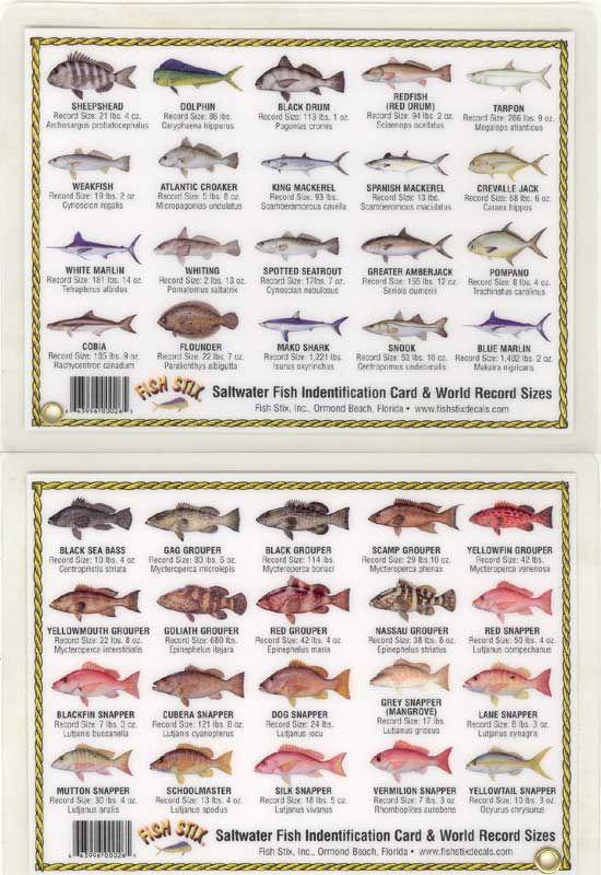 97 best fish chart images on pinterest fish chart fishing stuff fish identification saltwater sciox Gallery