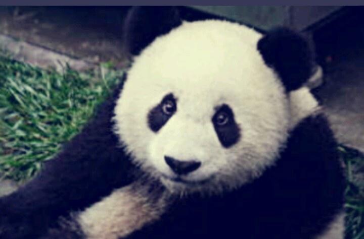 이친구를 보면 이 동물이 생각나요♥.♥