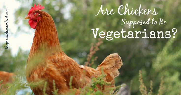 Are Chickens Supposed to be Vegetarian  http://www.theprairiehomestead.com/2014/02/vegetarian-chickens.html