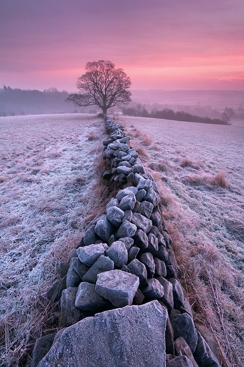 Winter Morning, stone wall in frosty fields, Yorkshire, England by Tristan Campbell