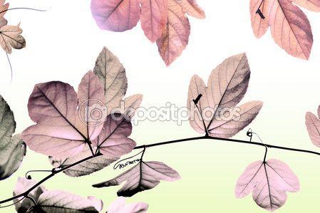 Nature background — Stock Photo © photostocknatonny #56067367