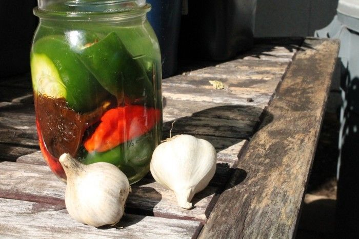 Fermented hot pepper sauce: aged to perfection.  Pack those pickled peppers!