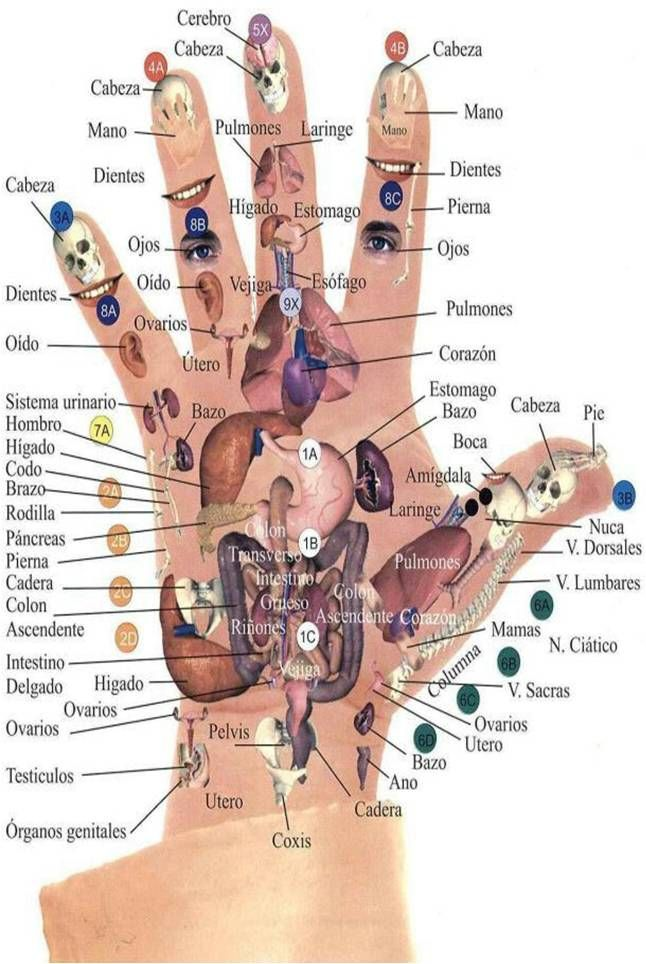 mira como eliminar el malestar del cuerpo con tan solo la punta de tus dedos