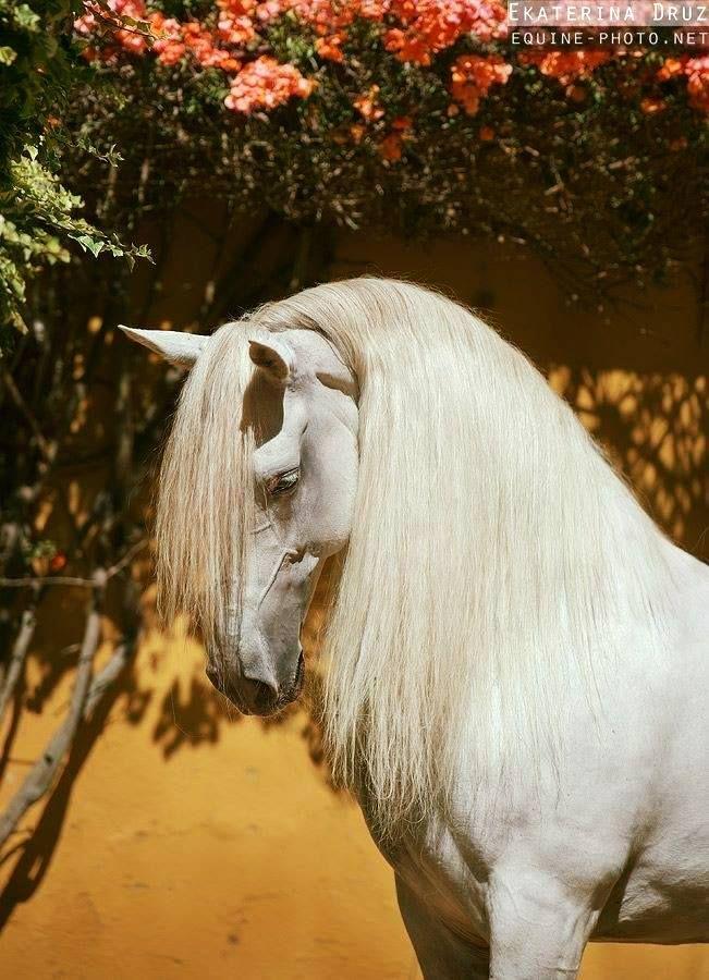 ALFA * Photo by Ekaterina Druz Horse Photography  Escola de Equitação de Alcainça