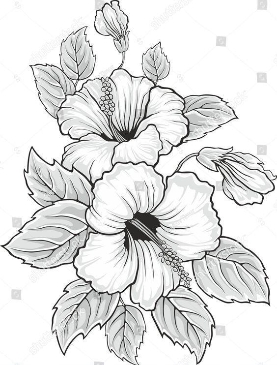 своей гибискус цветок рисунок графика ник подразделение
