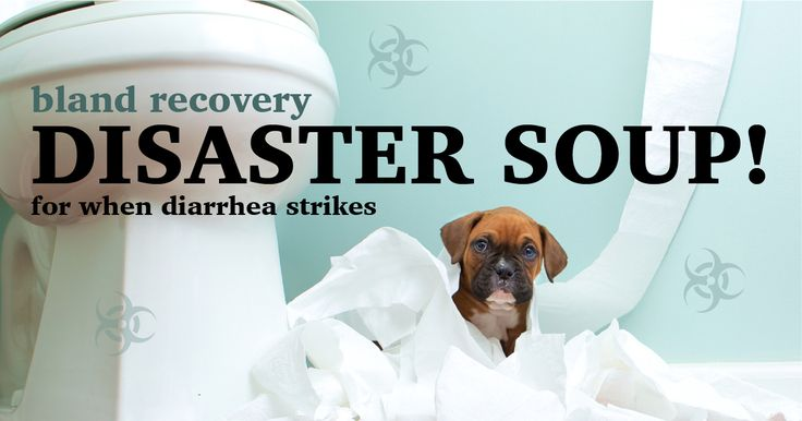 Quick Soup Recipe For Your Dog's Upset Stomach