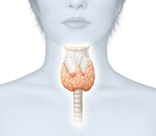 Anxiety as a symptom of overactive thyroid