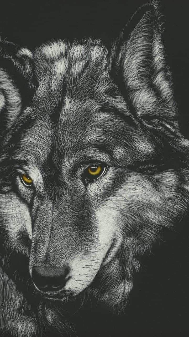 Epingle Par Pat Chouly Sur Mes Amis Les Loups En 2020 Fond Ecran Smartphone Loup Fond Ecran