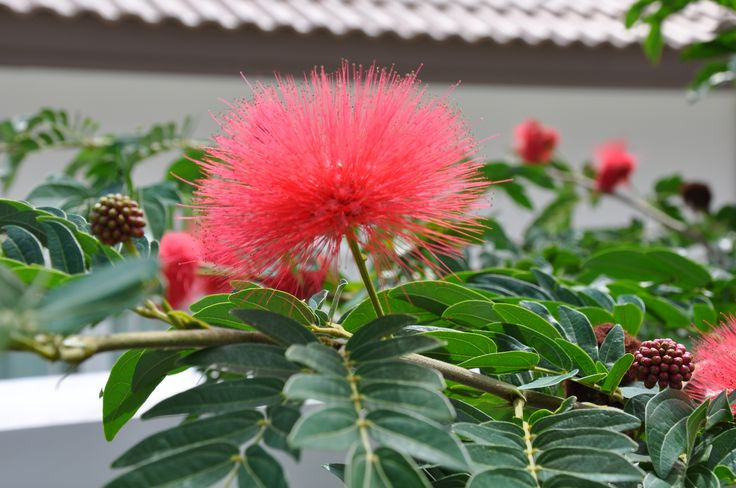 Flower in Thailand