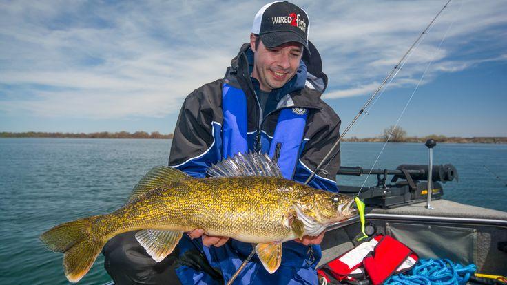Tim Allard with a big Canadian walleye on a drop shot #reellife #gearthatfitsyourlifestyle www.reellifegear.com