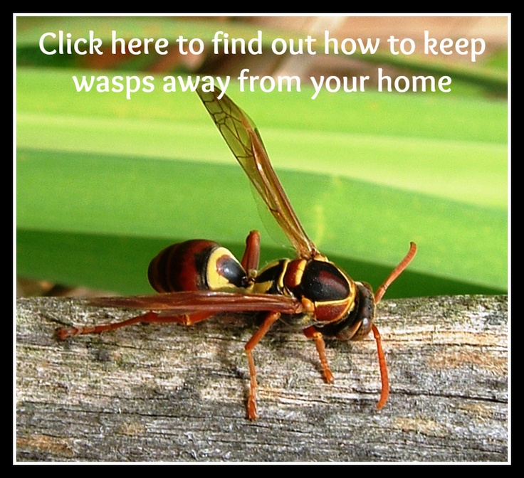 how to keep hornets away from your house