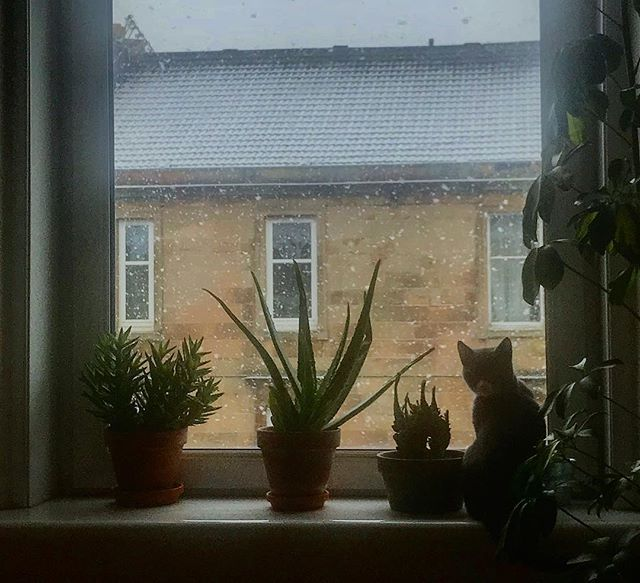 Jura looking out on another snow shower #snow #snowday #kittens #kitten #kittensofinsta #kittensofinstagram #glasgow #tenement #glasgowsouthside #strathbungo #winter