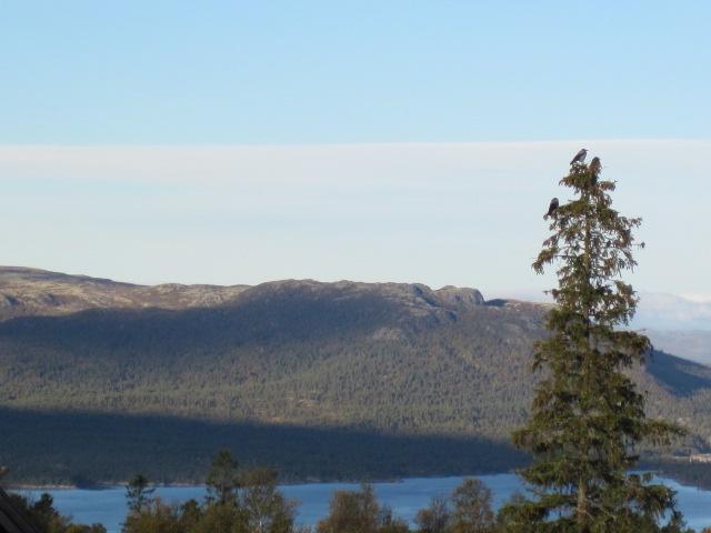 norwegian nature.