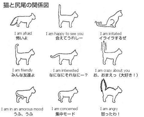 しっぽをピーンと立てるのは大好きの証!ネコの言葉を理解する方法まとめ