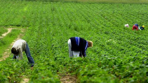 Pracowników sezonowych nie obejmą przepisy dot. płacy minimalnej