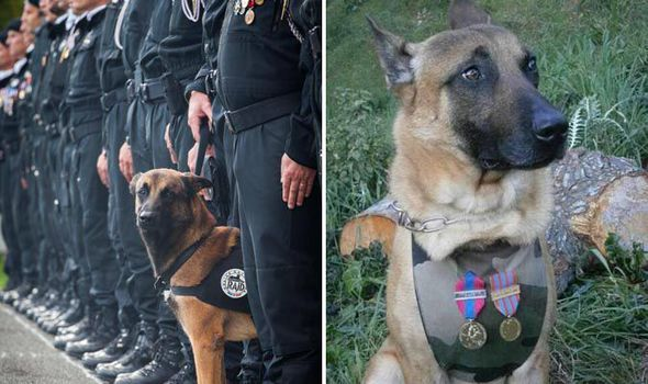 The death of the Belgian Malinois sheepdog has brought about universal feelings of sorror