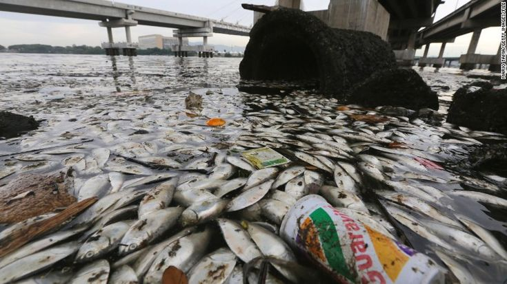 04/16/2015 - Dead fish litter Rio's Olympic rowing, canoeing courses