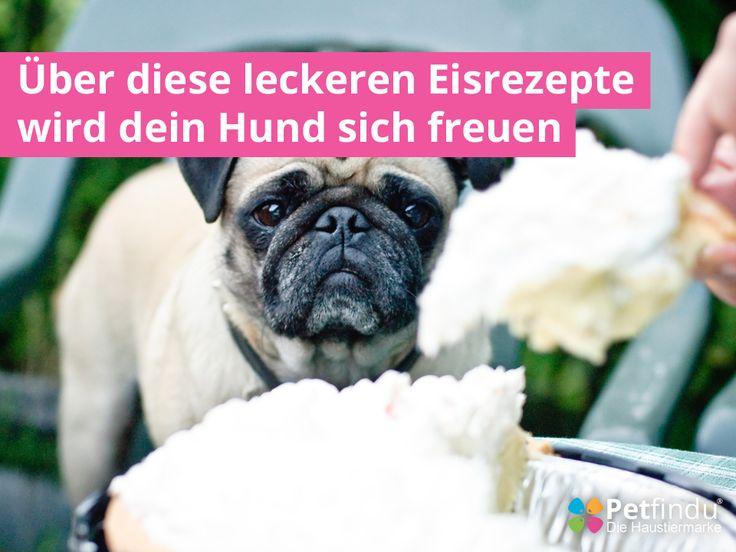 Somit übersteht dein Hund den Sommer. 5 leckere Eisrezepte für deinen Hund. Help your pets keep cool this summer. 5 tasty ice recipes